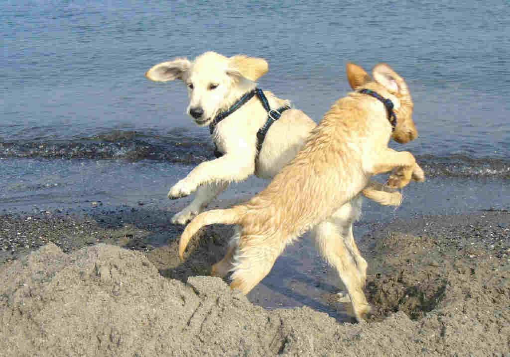 ungeimpfter hund biss